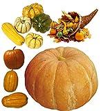100 piezas de mezcla de semillas de calabaza llenas de nutrición Verduras verdes no transgénicas para jardín, patio, balcón, plantación eficiente, fácil de cosechar