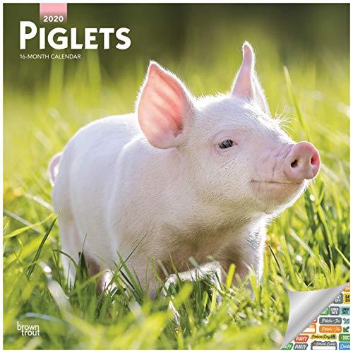 Piglets Calendar 2020 Piglets Wall Calendar with Over 100 Calendar Stickers