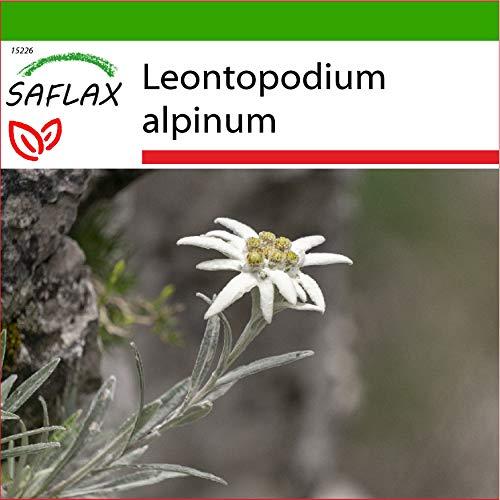 SAFLAX - Heilpflanzen - Edelweiss - 500 Samen - Mit keimfreiem Anzuchtsubstrat - Leontopodium alpinum