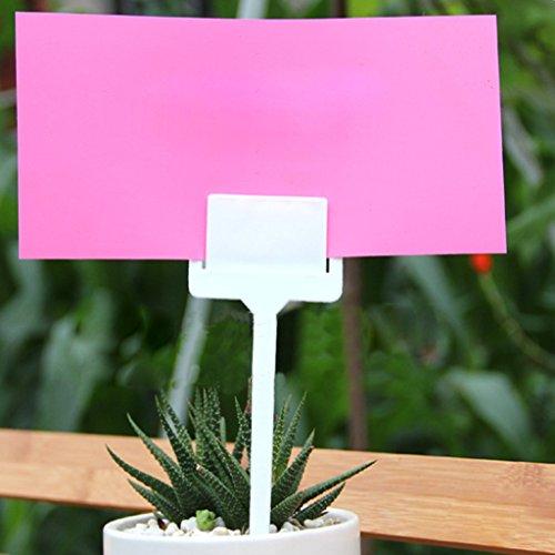 B Blesiya 20x Semences étiquettes en Plastique Marqueurs De Jardin étiquettes De Fleurs des Plantes De Paquets Support Blanc