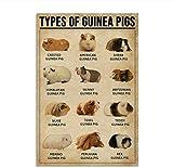Meerschweinchen Poster wie Hamster für Schlafzimmer