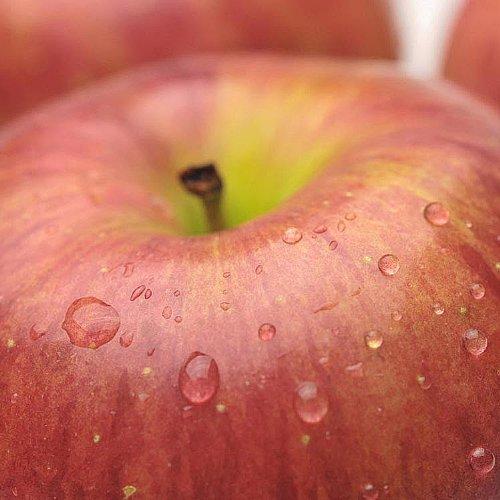 りんご サンふじ リンゴ 1箱 2.5kg 果物 ギフト 長野県産