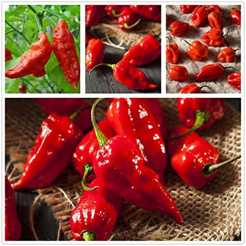 "Ghost Hot Pepper Seeds-bhut jolokia Red 1,000,000 shu 3oz Organic Hot Chili Vegetable Seed Organic""Carolina Reaper"" Pepper Seeds (hot Chilli) (20 + semi)"