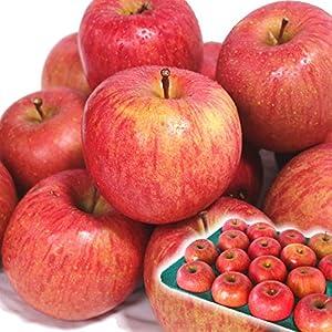 青森県産 りんご 5kg箱 訳あり サンふじ 林檎