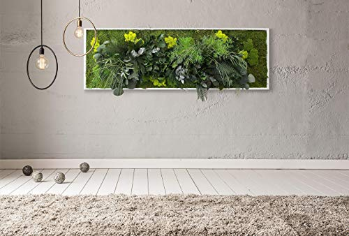 'Il Vivido', Tableau de plante...