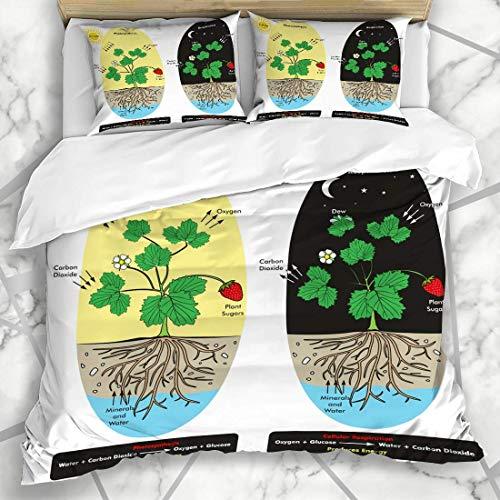 Bettbezug-Sets Photosynthese Dioxid Tau Baum Kohlenstoff Zellatmung Prozess Pflanze während des naturwissenschaftlichen Unterrichts Weiches Mikrofaser Dekoratives Schlafzimmer mit 2 Kissenbezügen