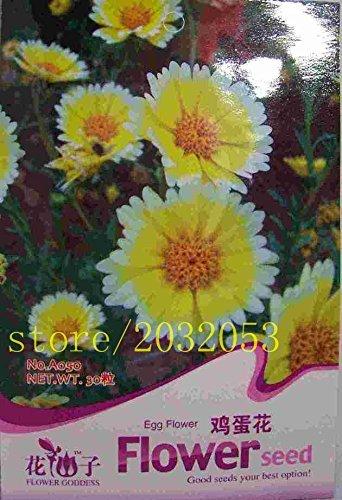 Paquet d'origine 50 semences parfum de fleur élégante d'oeuf, Plants Persian Buttercup Seed Flower jardin des plantes de bricolage