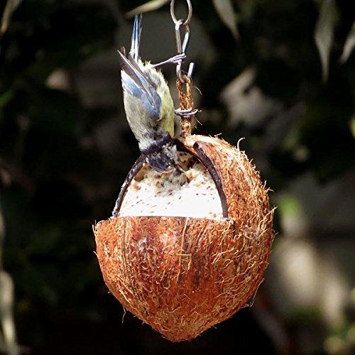 Gefüllte Kokosnuss - mit Mehlwürmer (6 x 350g)