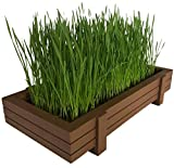 Certified Organic Wheatgrass Kit with Beautiful Wooden Countertop Planter, Soil & Organic Wheatgrass Seeds for 2 Crops, Spray Bottle & Easy to Follow Instructions. 100% Guaranteed to Grow.
