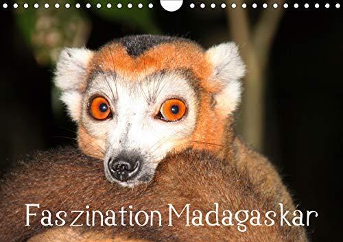 Faszination Madagaskar (Wandkalender 2021 DIN A4 quer)