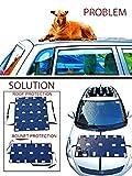 hood Prakash Protection of car from Dog & Monkeys for Roof and Bonnet