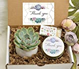 Thank You Gift Ideas - Live Succulent Gift Box - Appreciation Gift - Gift for Co-Workers - Corporate Thank You Gift -Corporate Gift Ideas
