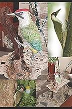 DESDE TAXIDERMY A LA ESCULTURA: NOCIONES Y TÉCNICAS VOL. 4 AVES: Escultura de un carpintero verde (Dalla Tassidermia alla Scultura) (Spanish Edition)