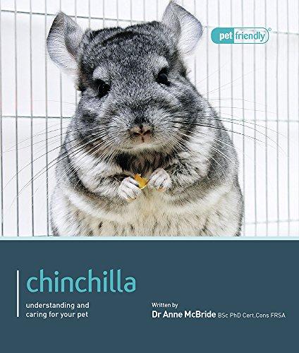 Chinchilla. (Pet Friendly)