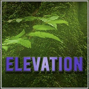 Elevation