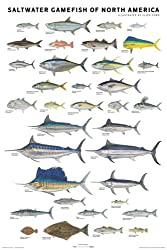 Fish identification posters for Virginia saltwater fishing