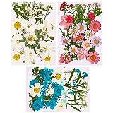 Veraing 106 Stück Gepresste Blumen, Natürliche Gepresste Blumen Getrocknete Blätter Getrocknet Gänseblümchen Gemischt für Kunst Basteln DIY Harz Scrapbooking Handwerk Karten Machen