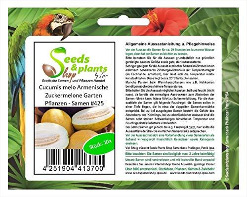Stk - 10x Cucumis melo Armenische Zuckermelone Garten Pflanzen - Samen #425 - Seeds Plants Shop Samenbank Pfullingen Patrik Ipsa