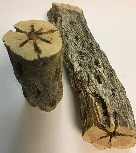 Natur Deko für Aquarien und Terrarien / Knabberstücke für Garnelen und Welse 2 x Cholla Kaktus Holz massiv ~40mm Ø x 80mm + 150mm lang von Catappa-Leaves