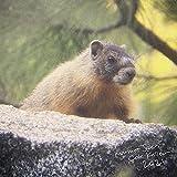 Marmot Song