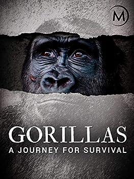 Gorillas  A Journey For Survival