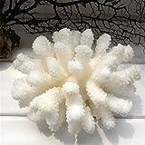 YiYueTrade 12-14cm 100% Natural Coral Mar Coral Blanco Árbol Coral Coral Acuario Paisajismo Decoración del Hogar Adornos Decoración del Hogar