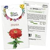 Graines de Zinnia: Kit graine de fleurs pour environ 60 plantes de Zinnia - Plante pour jardin et balcon à semer et à faire pousser - Graines de fleur à planter - Qualité supérieure OwnGrown