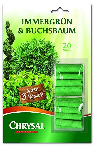 Buis Lot plantes Engrais pour boîtes de buis