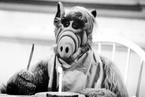 Moviestore Benji Gregory als Brian Tanner aka Alf Tanner in ALF 91x60cm Schwarzweiß-Posterdruck