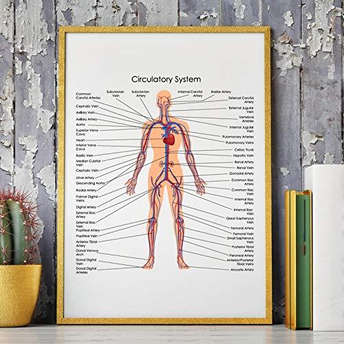 liwendi Diagrama del Sistema Circulatorio Humano Poster Impr