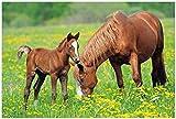 Wallario Poster - Pferde auf der Koppel in