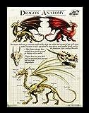 Kleine Leinwand Drachen Anatomie   Dragon Anatomy 25 x 19