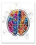 Human Brain Medical Anatomy Wall Art, 11x14 inch Ready to Frame Abstract Watercolor Style Print, Ideal for Doctors, Nurses and Medical Professionals, Clinic Décor or Medical Office