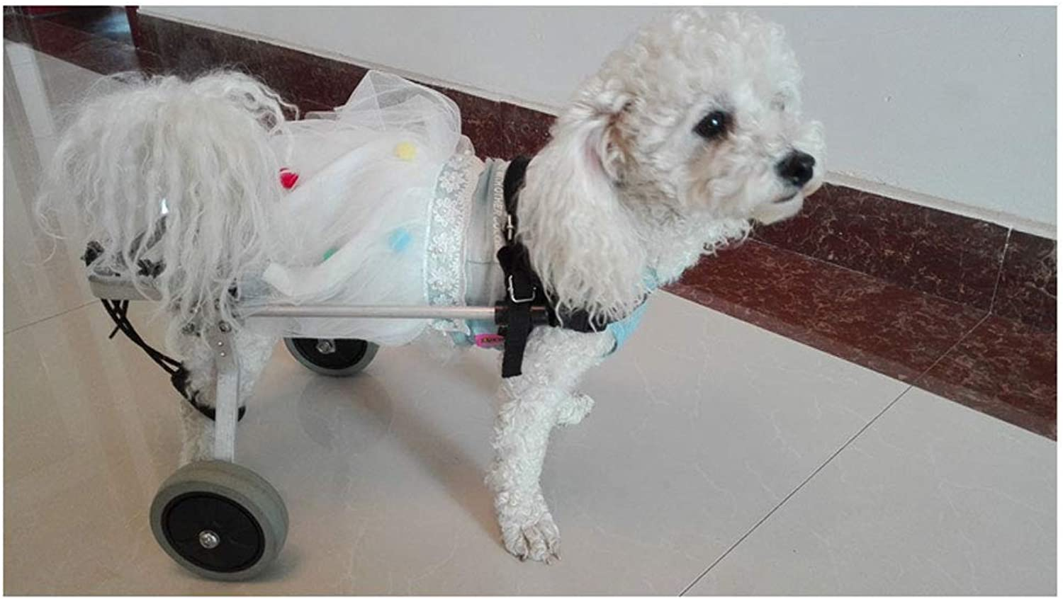 LLGCWLY Dog wheelchair, dog training car, pet scooter adjustable dog pet wheelchair hind leg repair, large small dogs can be used, can be adjusted in size, (Size   XS)