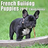 Mini Calendar 2020 7x7 French Bulldog Puppies: High Quality French Bulldog Puppies Photos Small Calendar With Inspirational Quotes each Month