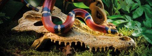 Exo Terra Krokodilschädel - 3