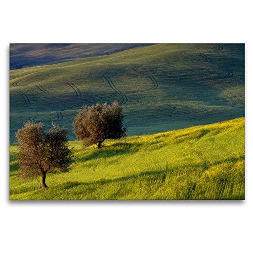 Premium Textil-Leinwand 120 x 80 cm Quer-Format Olivenbäume | Wandbild, HD-Bild auf Keilrahmen, Fertigbild auf hochwertigem Vlies, Leinwanddruck von Peter Schürholz