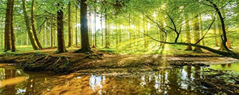 Artland Qualittsbilder I Glasbilder Deko Bilder Günter Albers Wald mit Bach Landschaften Wald Fotografie Braun 50 x 125 x 1,1 cm C0ZA