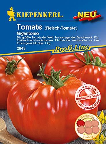 Fleisch-Tomate Gigantomo F1, die größte Tomate der Welt, hervorragender Geschmack, für Freiland und Gewächshaus