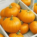 New Pumpkin Seeds - Best Reviews Guide