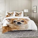 DIIRCYB Bettbezug-Bettwäsche,Nahaufnahme eines Chihuahua isoliert auf weiß,Mikrofaser-1 Bettdecke-Bettlaken 200×200CM und 2 Kissenbezüge 50×80CM