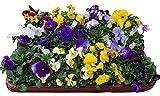 12x Hornveilchen Mix im 9,5cm Topf (Viola cornuta)