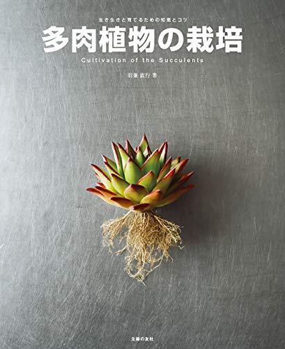 多肉植物の栽培