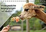 Unvergessliche Begegnungen mit Alpakas (Tischkalender 2019 DIN A5 quer): Unvergessliche Begegnungen für die Alpakas - und für Sie. (Monatskalender, 14 Seiten ) (CALVENDO Tiere) - Heidi Rentschler