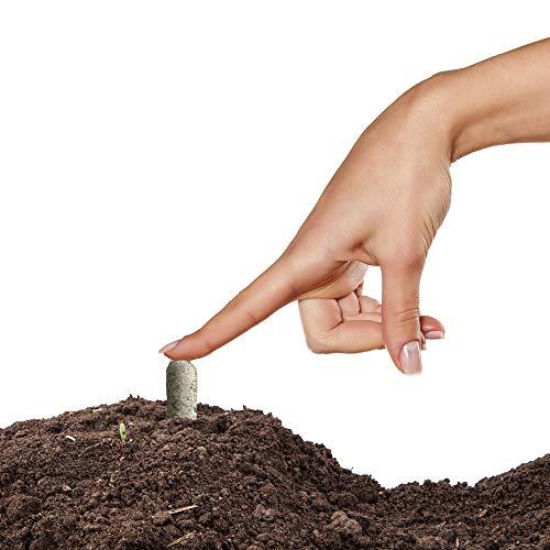 4. Jobe's Succulent Fertilizer Spikes