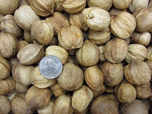 Shag Bark Hickory Nuts with shell 15 oz