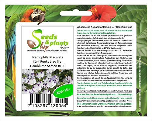 Stk - 20x Nemophila Maculata blau lila Hainblume Pflanzen - Samen #169 - Seeds Plants Shop Samenbank Pfullingen Patrik Ipsa