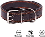 Dog Collars For Large Dogs Review and Comparison