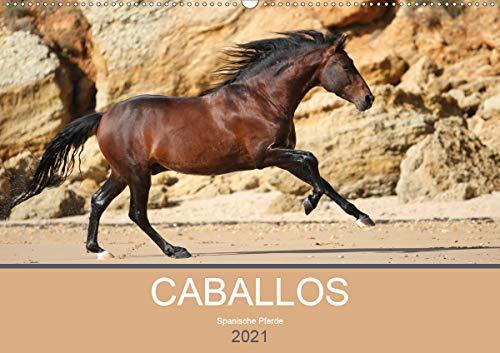 Caballos Spanische Pferde 2021 (Wandkalender 2021 DIN A2 quer)