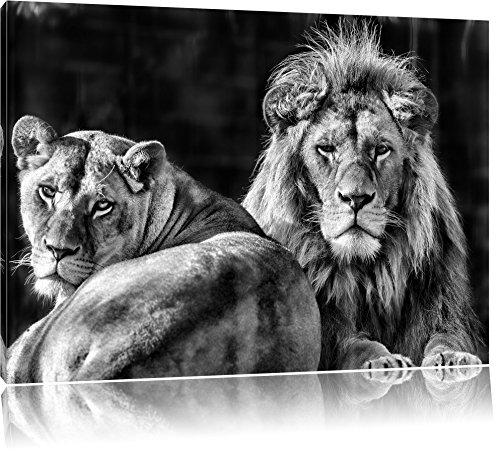 Pixxprint schönes Löwenpaar als Leinwandbild | Größe: 60x40 cm | Wandbild | Kunstdruck | fertig bespannt